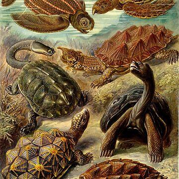 Haeckel Chelonia Turtles by neonxiomai
