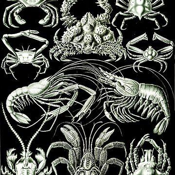 Haeckel Nature Decapoda Crustaceans by neonxiomai