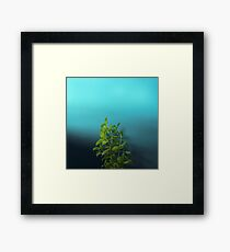 Shy and charming basil Framed Print
