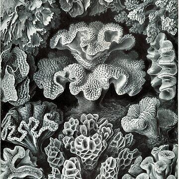 Haeckel Corals by neonxiomai