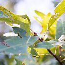 Sommer Blätter von Kendra Kantor
