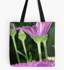 Purple And Pink Daisy Flower in Full Bloom Tote Bag