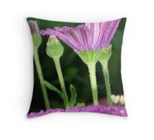 Purple And Pink Daisy Flower in Full Bloom Throw Pillow