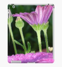 Purple And Pink Daisy Flower in Full Bloom iPad Case/Skin