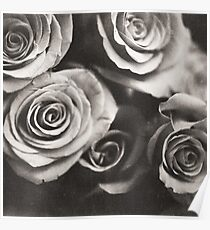 Medium format analog black and white photo of white rose flowers Poster