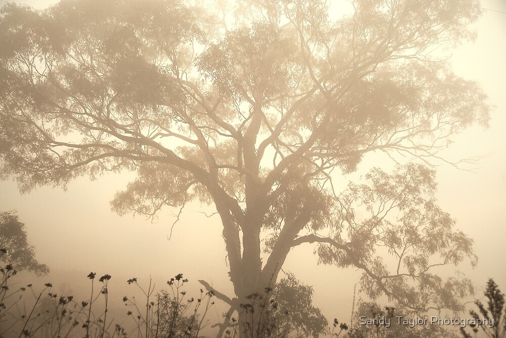 Morning fog by Sandy  Taylor Photography