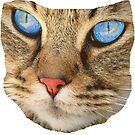 blue eyed cat by Rostislav Bouda