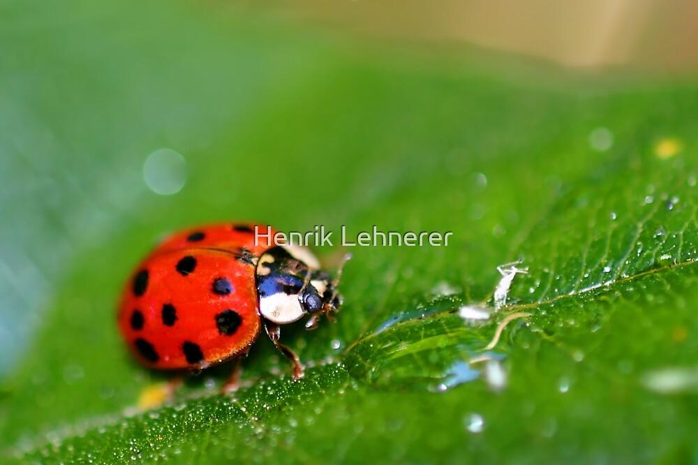 Lady Bug by Henrik Lehnerer