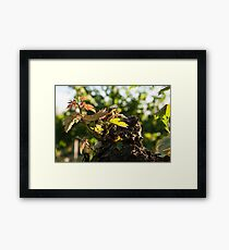 Small plant of vine born on a trunk Framed Print