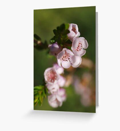 Chamelaucium (2) Greeting Card