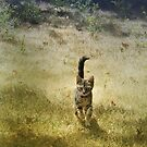 Run, kitten, run! by Lynn Starner