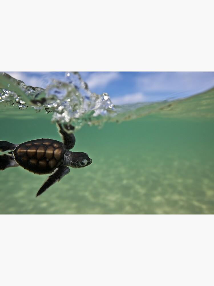 Baby surfing ninja turtle by DavidWachenfeld