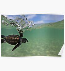 Baby surfing ninja turtle Poster