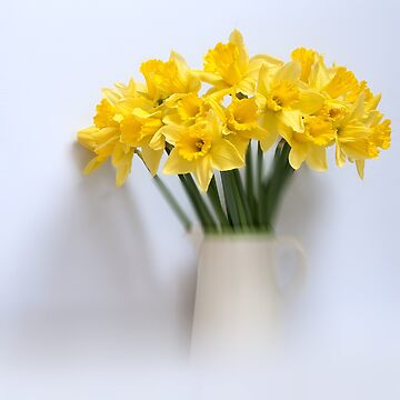 Daffodils in Jug by cherryannette