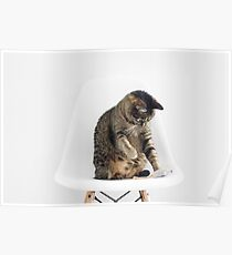 Cute Cat Playing Poster