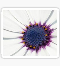 Beautiful White African Daisy Close-Up  Macro Sticker