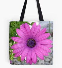 Violet Pink Osteospermum Flower Daisy Tote Bag
