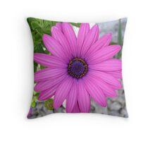 Violet Pink Osteospermum Flower Daisy Throw Pillow