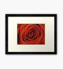 Red Rose Petals Framed Print