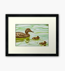 Mother Duck With Small Ducklings On Water Framed Print