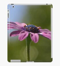 Macro Shot Of A Purple Osteospermum  iPad Case/Skin