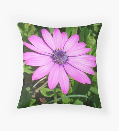 Single Pink African Daisy Against Green Foliage Throw Pillow