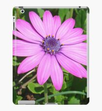 Single Pink African Daisy Against Green Foliage iPad Case/Skin
