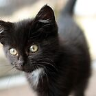 7 week old kitten by GreyFeatherPhot