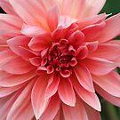 Dahlia by Terri~Lynn Bealle