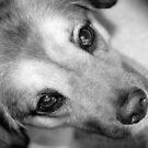 loyalty by Terri~Lynn Bealle