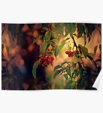 Red Berries in Fall Poster
