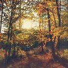 Andersons Cabin Fall View by ELIZABETH B