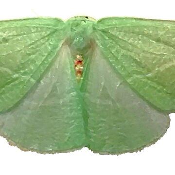 Chlorosea Banksaria (flawed wing) C by spookyluca