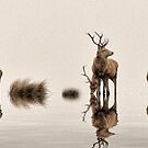 Deer on the Water by Dave Harnetty