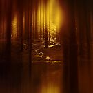 Forest Light 1. by Dave Harnetty