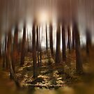 Forest Light 8. by Dave Harnetty