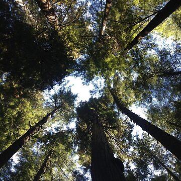 California Redwoods (I) by clairesalcedo