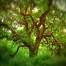 Treescape 1 by Dave Harnetty