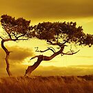 Tree Dance by Dave Harnetty