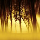 Gold Mist Story by Dave Harnetty