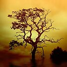 Evening Tree by Dave Harnetty