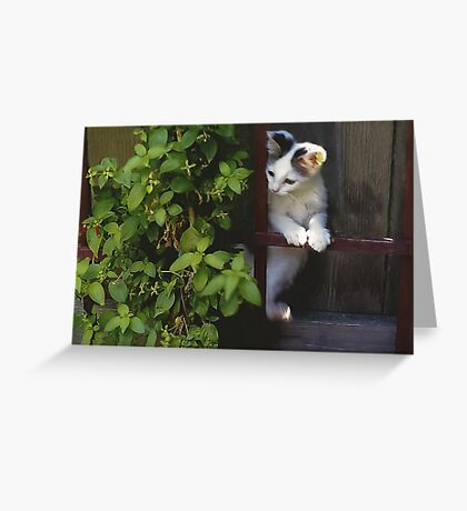 Curious Kitty! Greeting Card