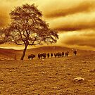 Buffalo View by Dave Harnetty