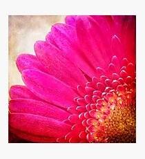 A Burst of Pink Photographic Print