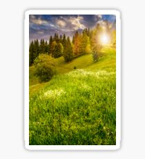 forest on hillside meadow in mountain at sunset Sticker