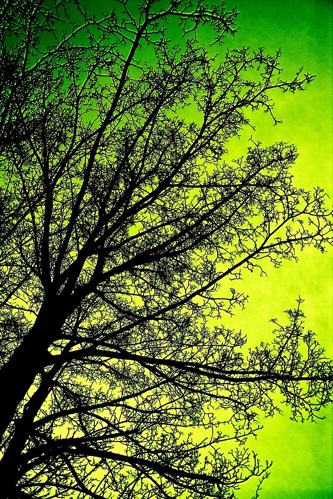The Greenest of Trees by Vicki Field