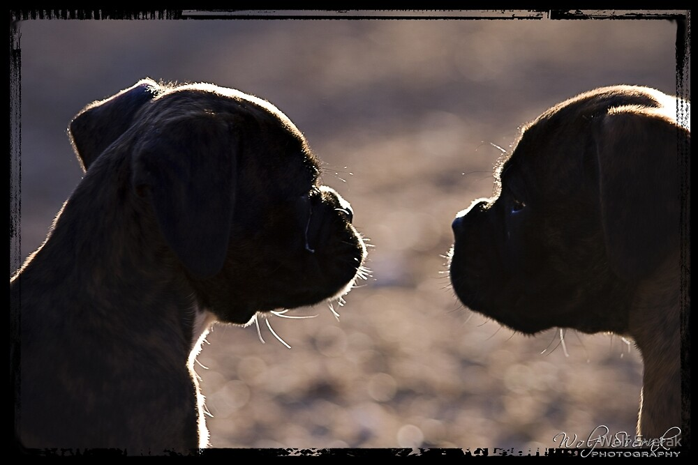 Two dogs in silhouette by Wolf Sverak