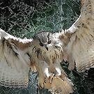 Owl by ELeggett