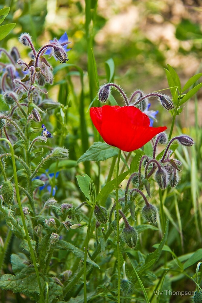 Poppy & Borage by vivsworld