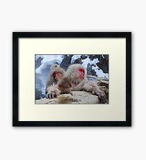 Snow monkeys Japan Framed Print